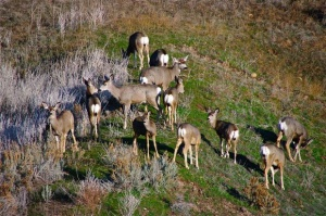 Idaho Game Hunting