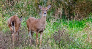 OSKALOOSA deer hunting