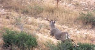 texas-deer-hunt