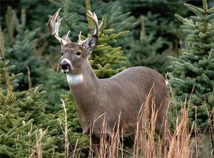 Georgia Firearm Deer Hunting Season