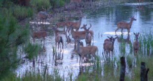 Flood Affecting Area In South Carolina Affects Hunting Season